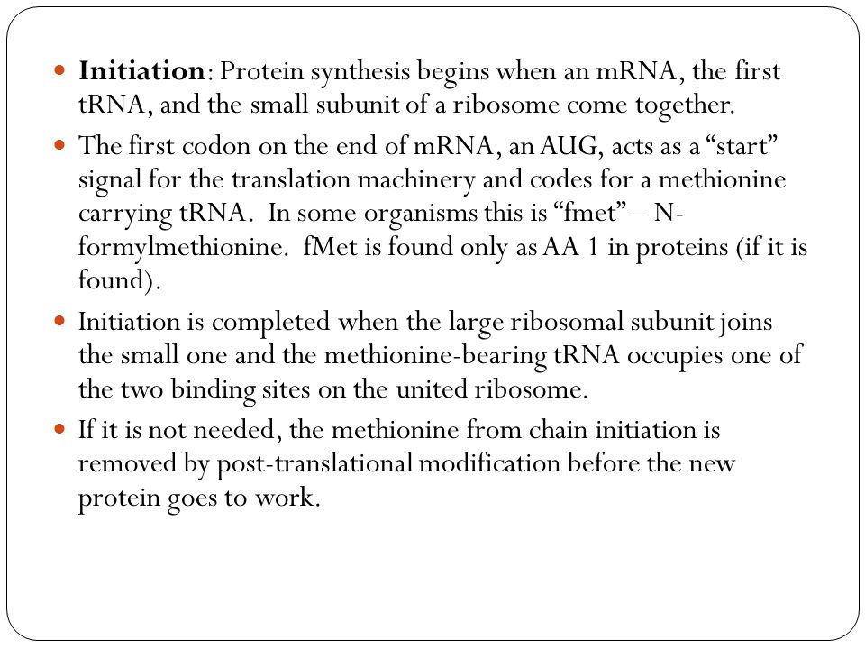 Initiation: Protein synthesis begins when an mRNA, the first tRNA, and the small subunit of a ribosome come together.