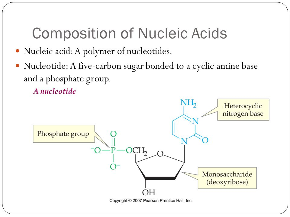 Composition of Nucleic Acids