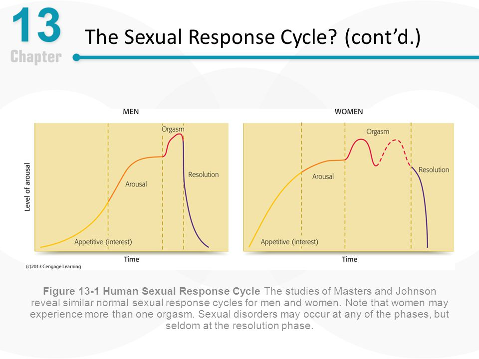 The Sexual Response Cycle (cont'd.)