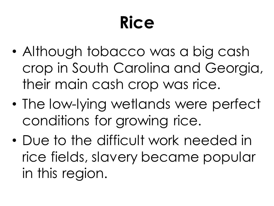 Rice Although tobacco was a big cash crop in South Carolina and Georgia, their main cash crop was rice.