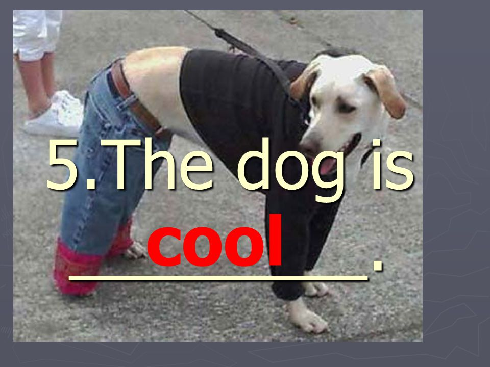 5.The dog is ________. cool