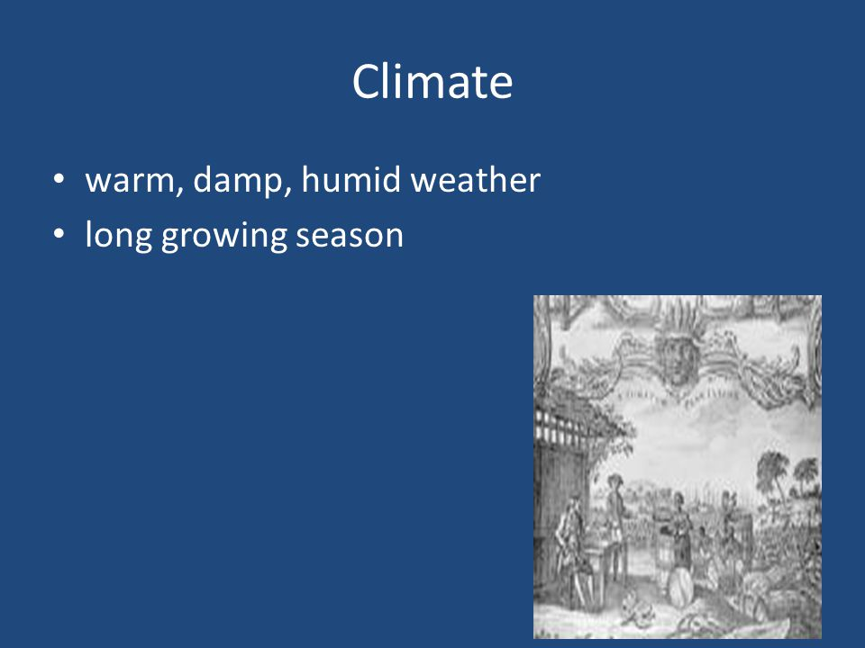 Climate warm, damp, humid weather long growing season