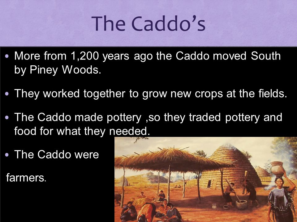 The Caddo's More from 1,200 years ago the Caddo moved South by Piney Woods. They worked together to grow new crops at the fields.