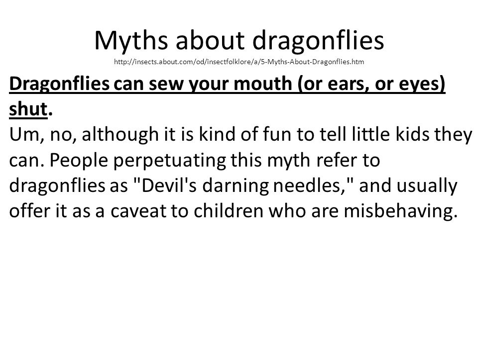Myths about dragonflies http://insects. about