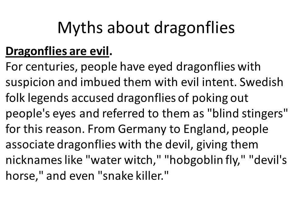 Myths about dragonflies