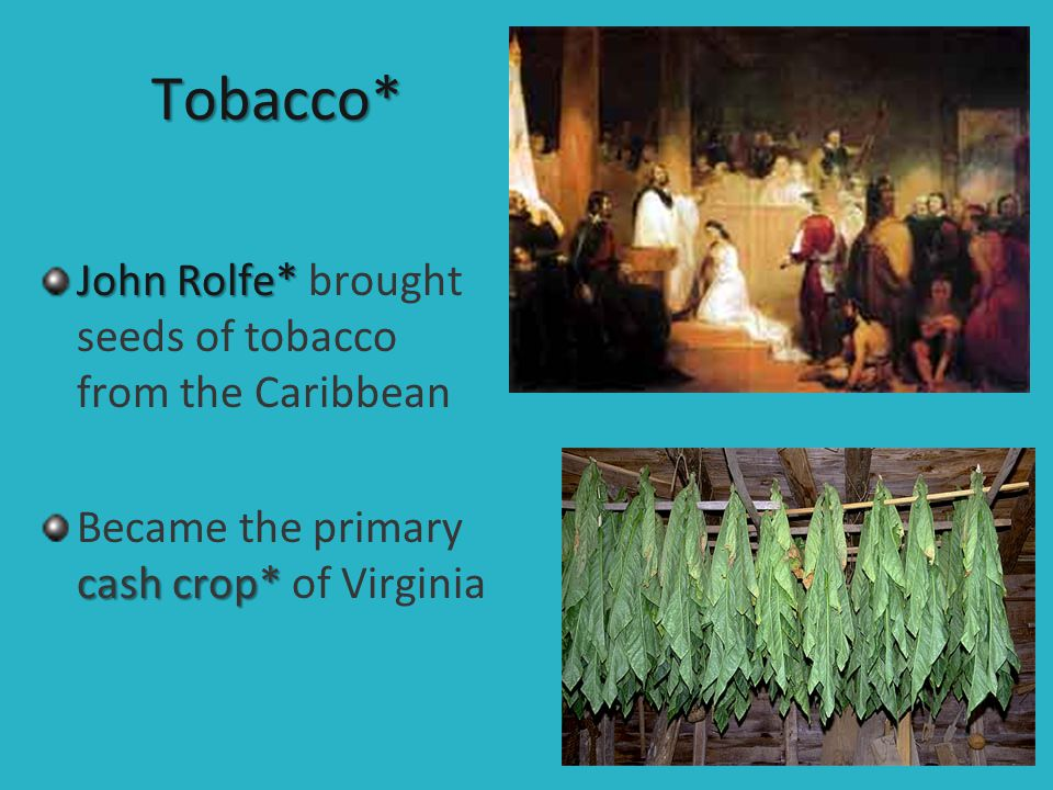 Tobacco* John Rolfe* brought seeds of tobacco from the Caribbean
