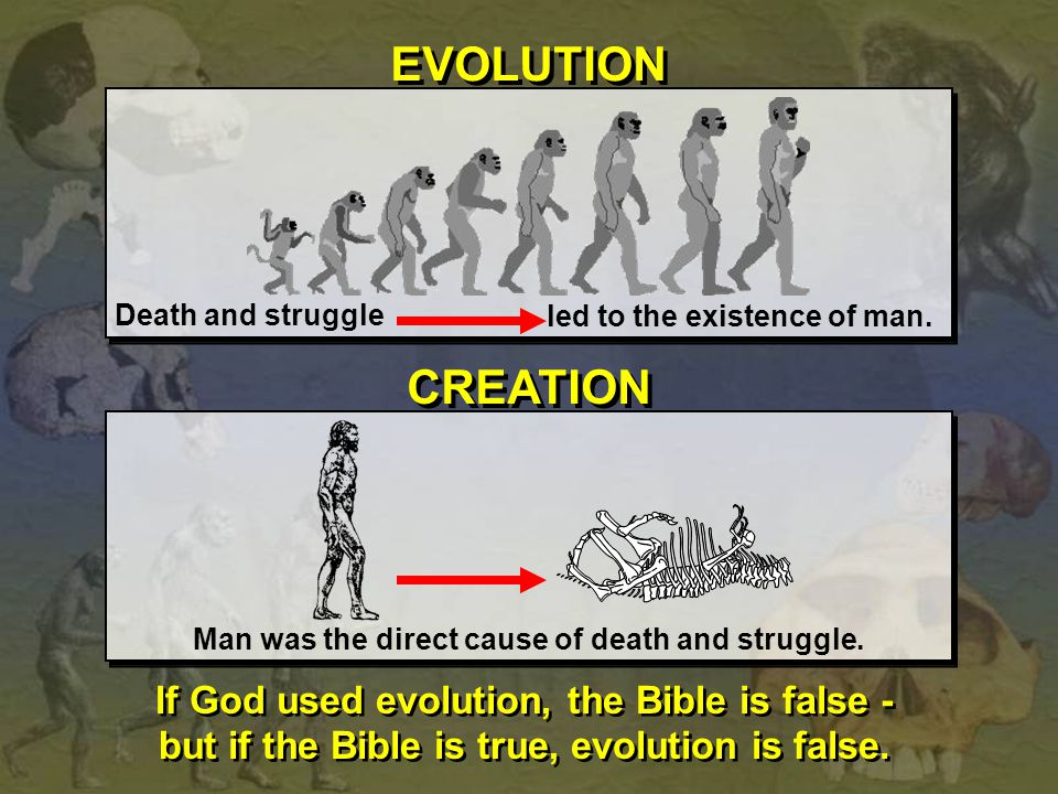 EVOLUTION CREATION If God used evolution, the Bible is false -