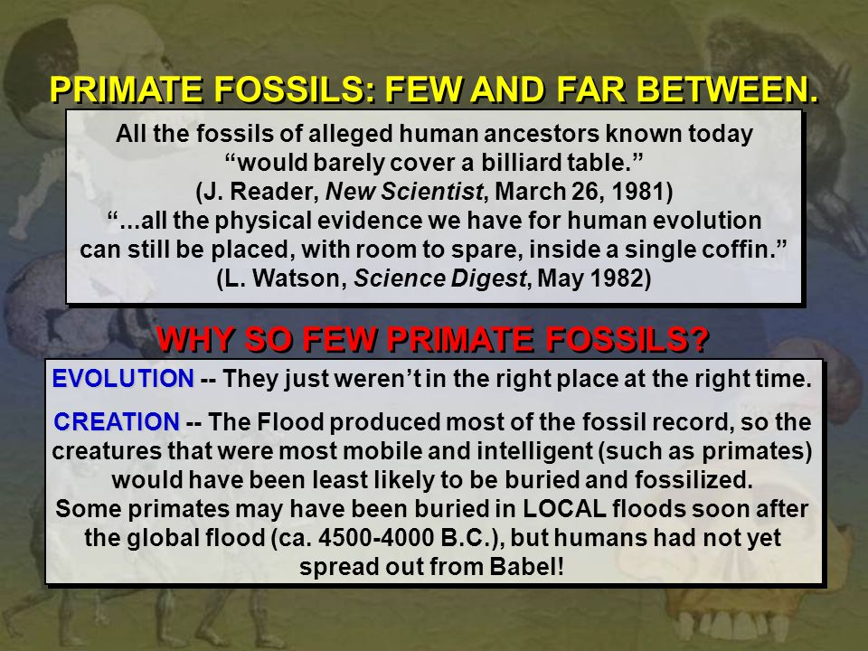 PRIMATE FOSSILS: FEW AND FAR BETWEEN.