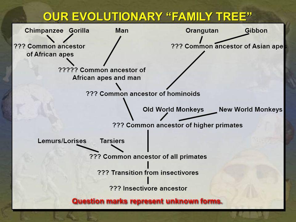 OUR EVOLUTIONARY FAMILY TREE