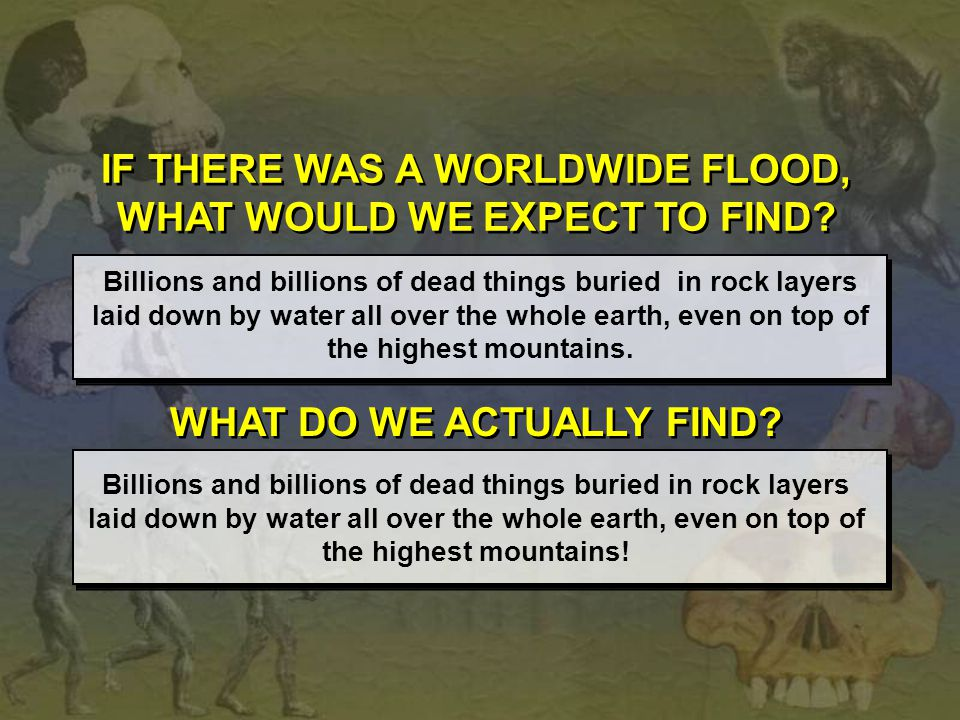 IF THERE WAS A WORLDWIDE FLOOD, WHAT WOULD WE EXPECT TO FIND