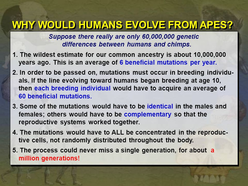 WHY WOULD HUMANS EVOLVE FROM APES
