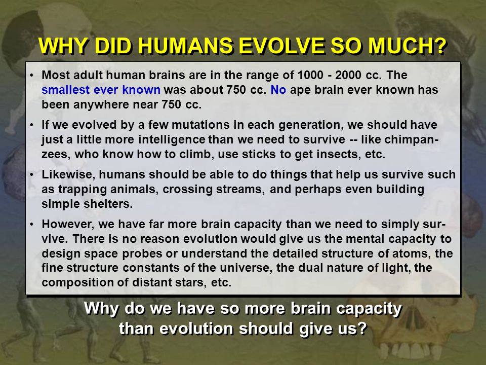Why do we have so more brain capacity than evolution should give us