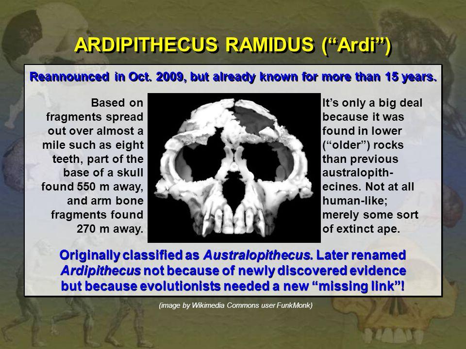 ARDIPITHECUS RAMIDUS ( Ardi )