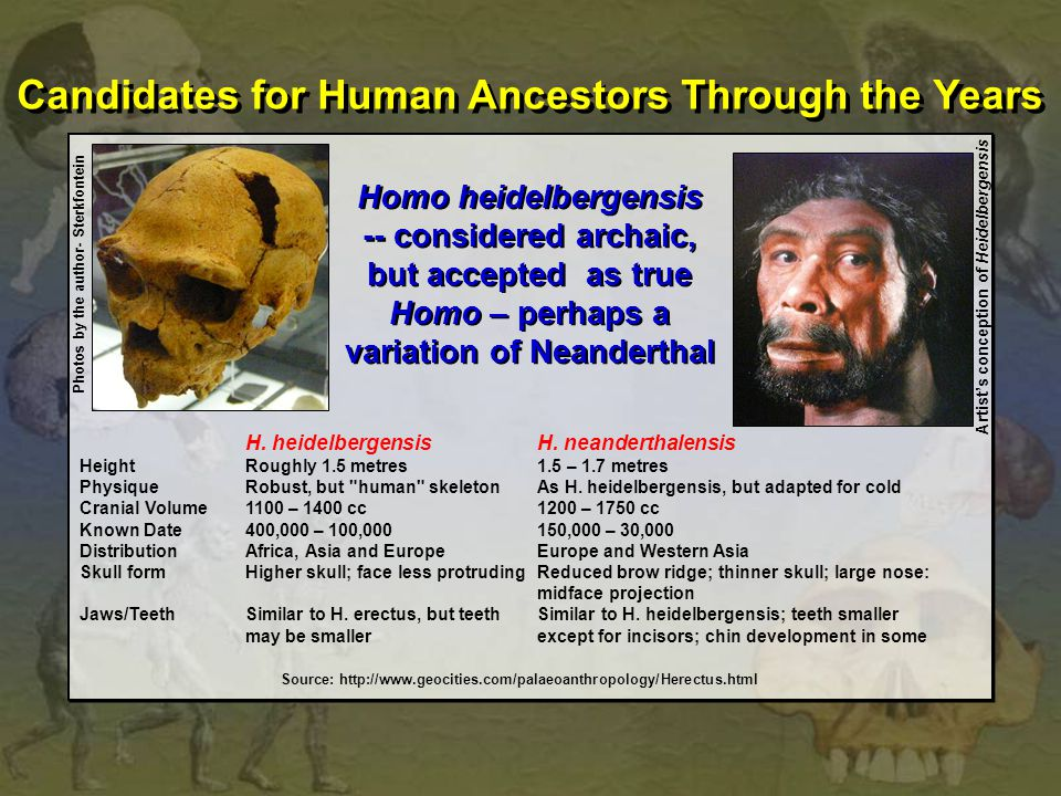 Candidates for Human Ancestors Through the Years