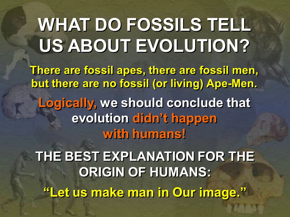 WHAT DO FOSSILS TELL US ABOUT EVOLUTION