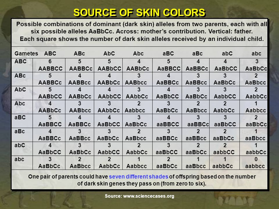 SOURCE OF SKIN COLORS