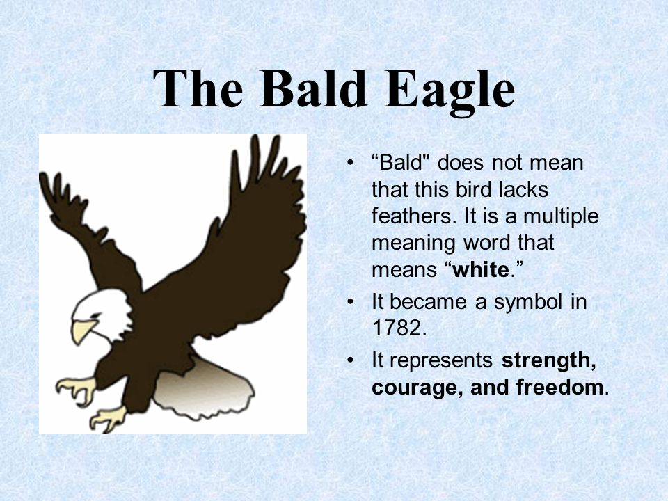 The Bald Eagle Bald does not mean that this bird lacks feathers. It is a multiple meaning word that means white.