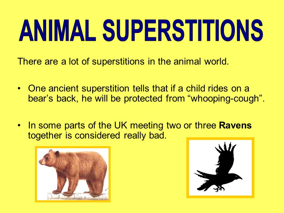 ANIMAL SUPERSTITIONS There are a lot of superstitions in the animal world.
