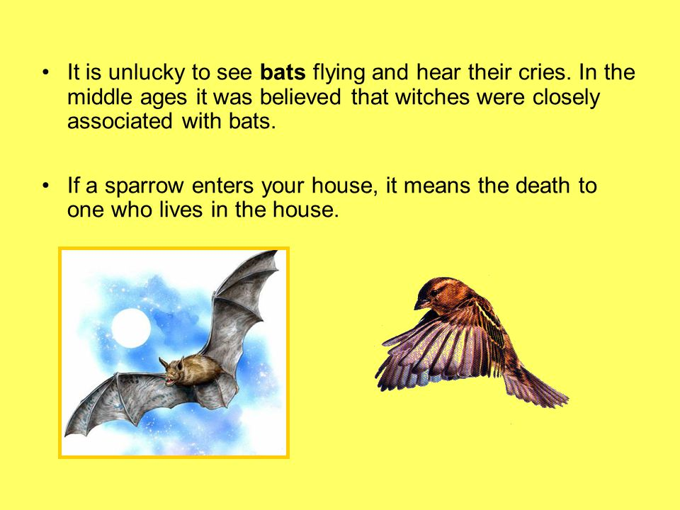 It is unlucky to see bats flying and hear their cries