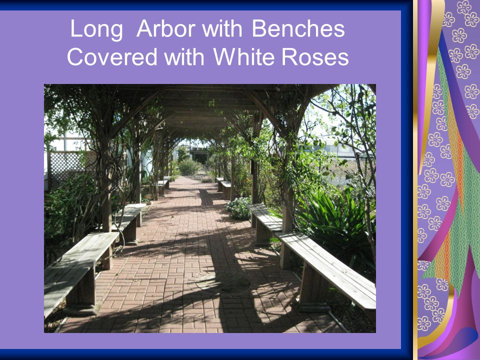 Long Arbor with Benches Covered with White Roses