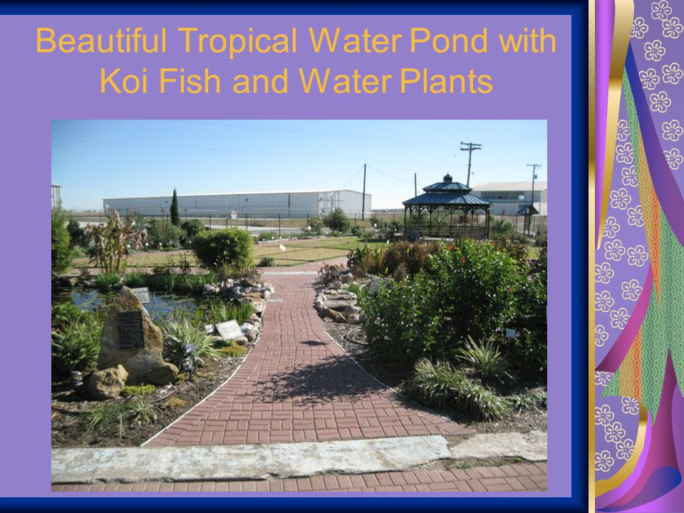 Beautiful Tropical Water Pond with Koi Fish and Water Plants