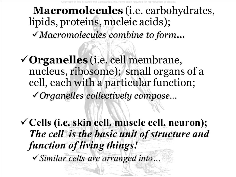 Macromolecules (i.e. carbohydrates, lipids, proteins, nucleic acids);