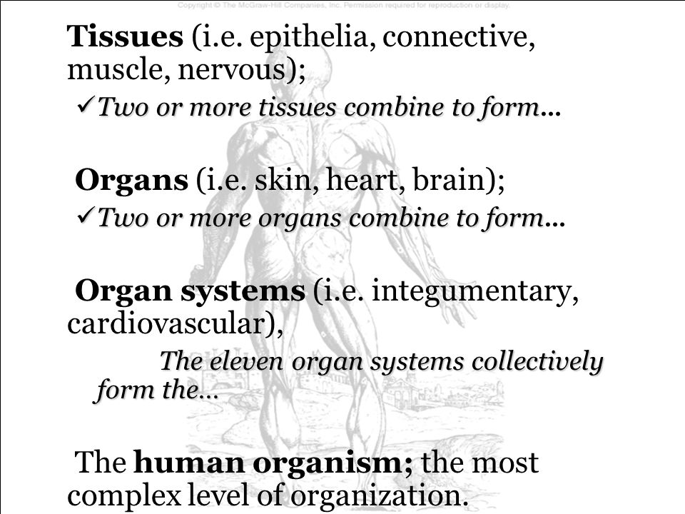Tissues (i.e. epithelia, connective, muscle, nervous);