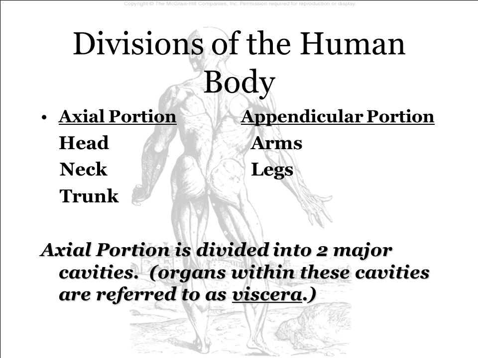 Divisions of the Human Body