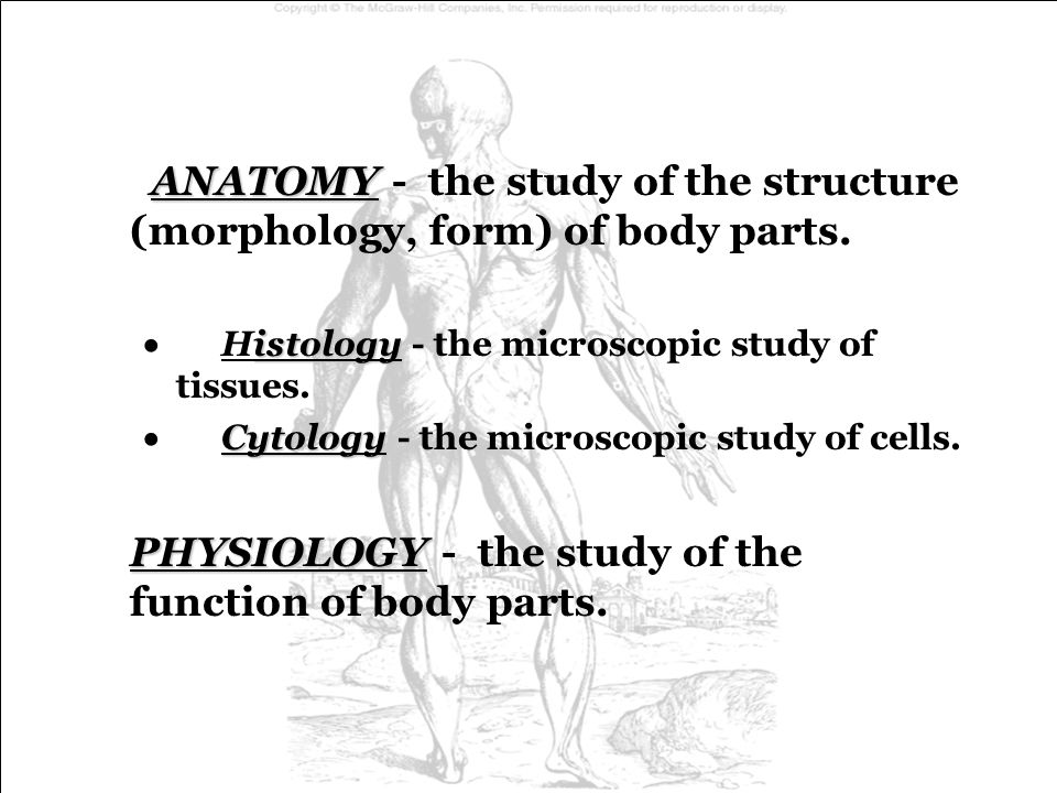 ANATOMY - the study of the structure (morphology, form) of body parts.