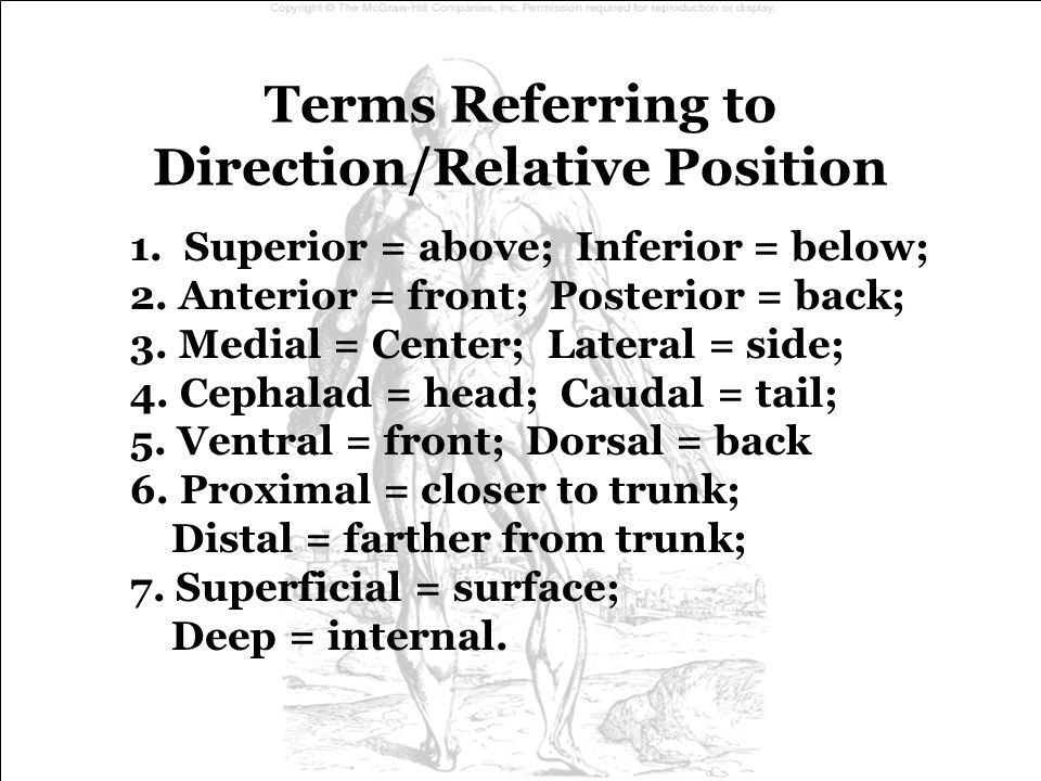 Terms Referring to Direction/Relative Position