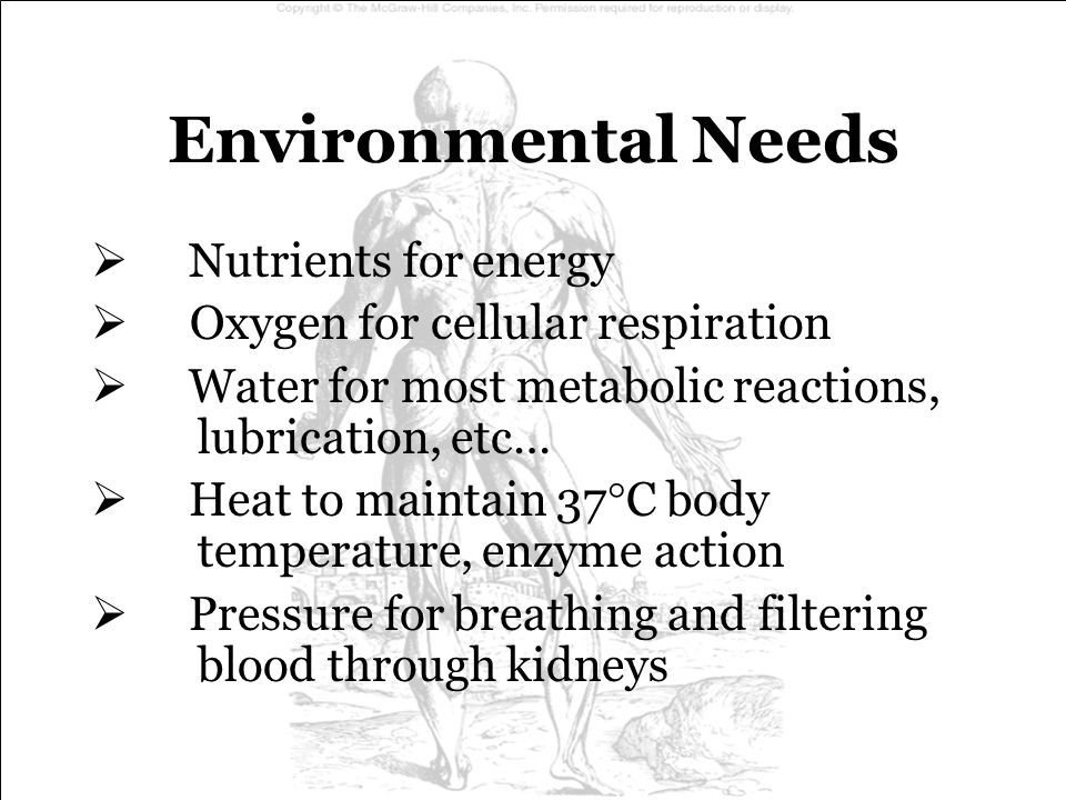 Environmental Needs Nutrients for energy
