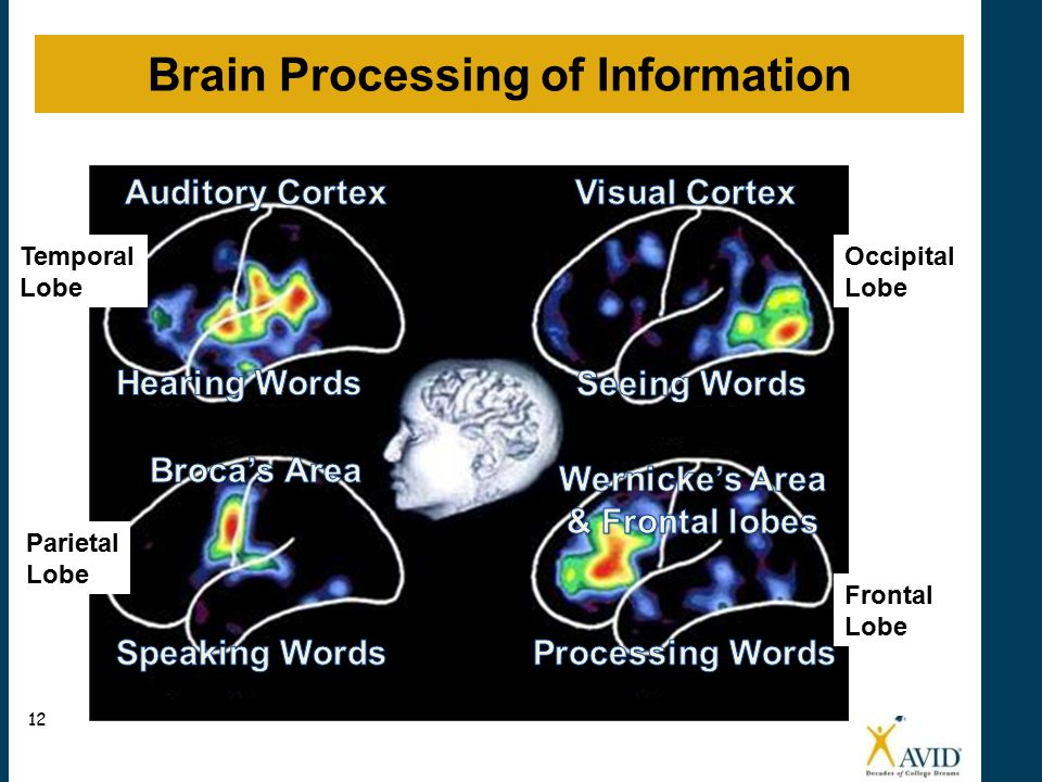 Brain Processing Activity