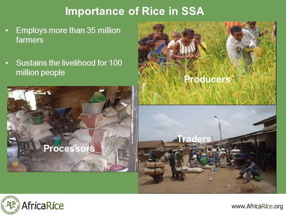 Importance of Rice in SSA