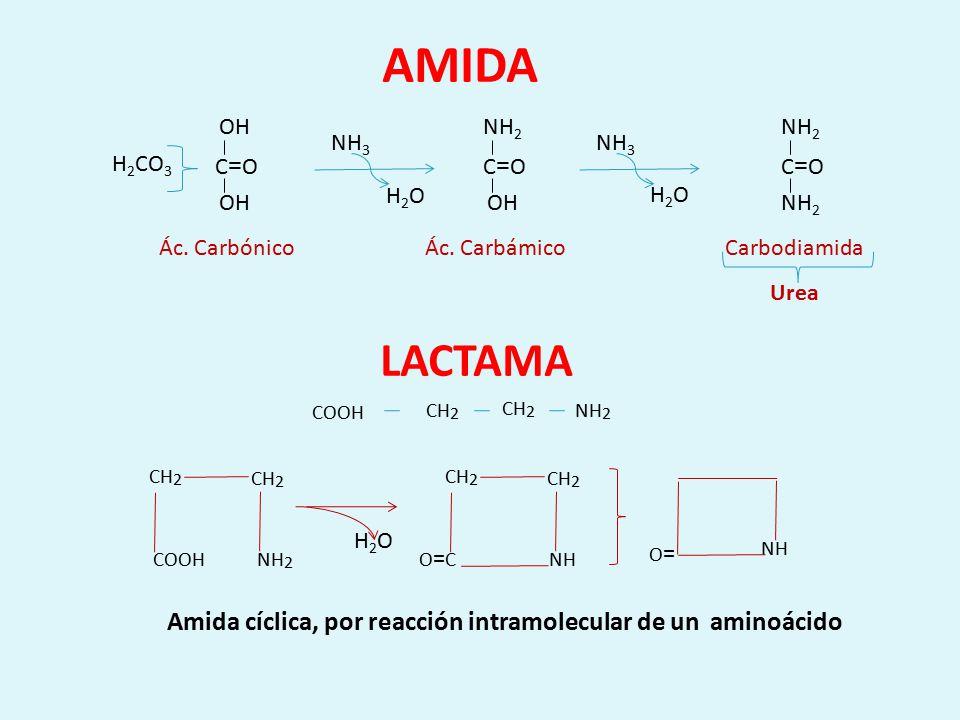AMIDA LACTAMA COOH CH2 NH2 COOH CH2 NH2 O=C CH2 NH O= NH