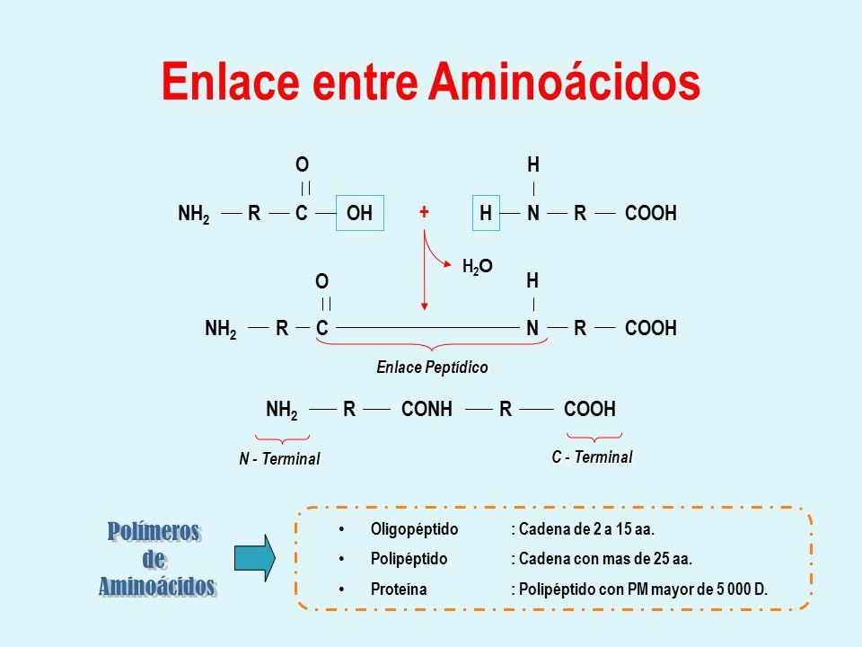 Enlace entre Aminoácidos