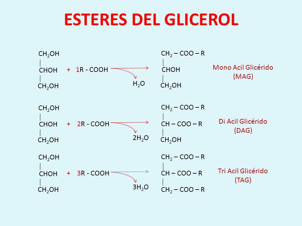 ESTERES DEL GLICEROL CHOH CH2OH CHOH CH2 – COO – R CH2OH