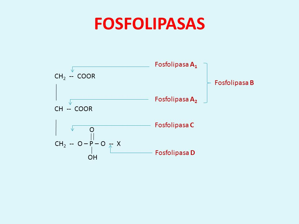 FOSFOLIPASAS Fosfolipasa A1 CH2 -- COOR Fosfolipasa B Fosfolipasa A2