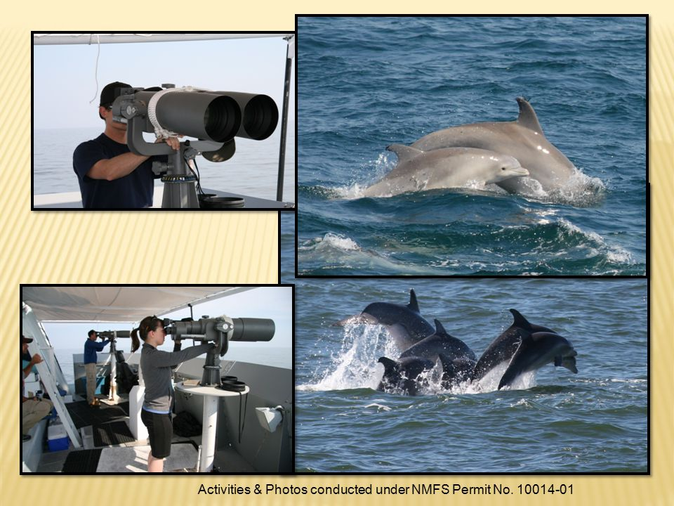 Activities & Photos conducted under NMFS Permit No. 10014-01