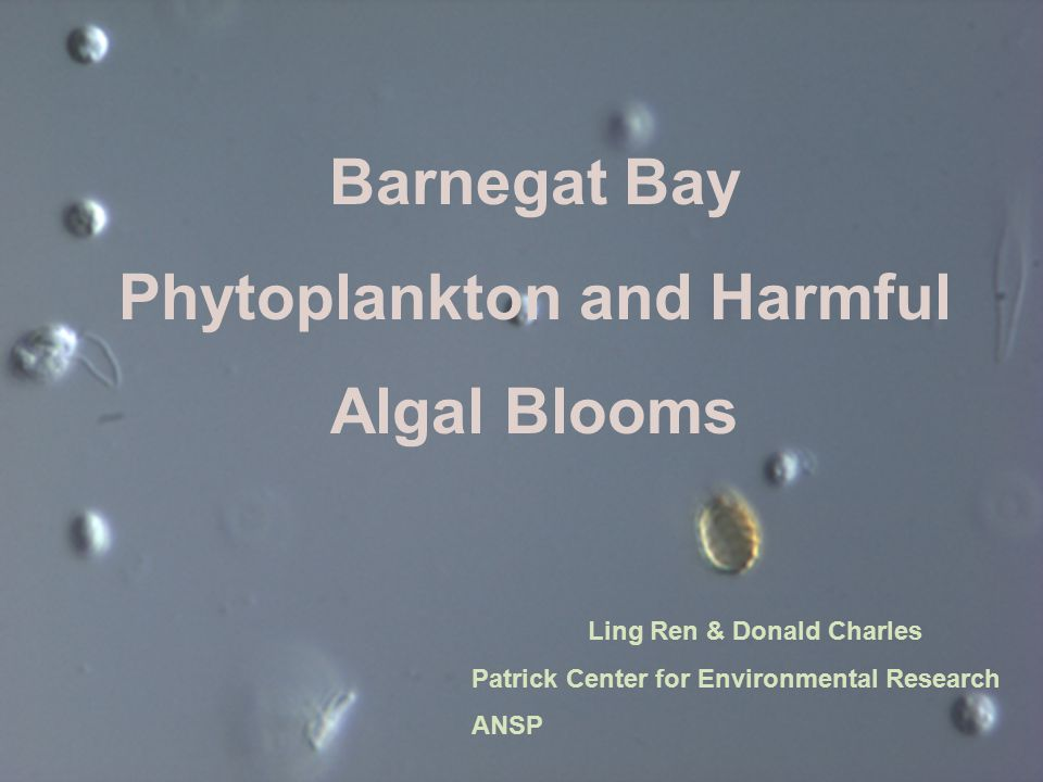 Phytoplankton and Harmful Algal Blooms