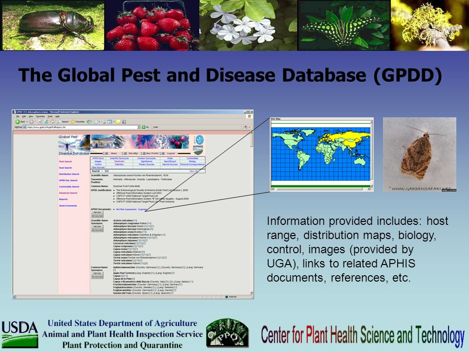 The Global Pest and Disease Database (GPDD)