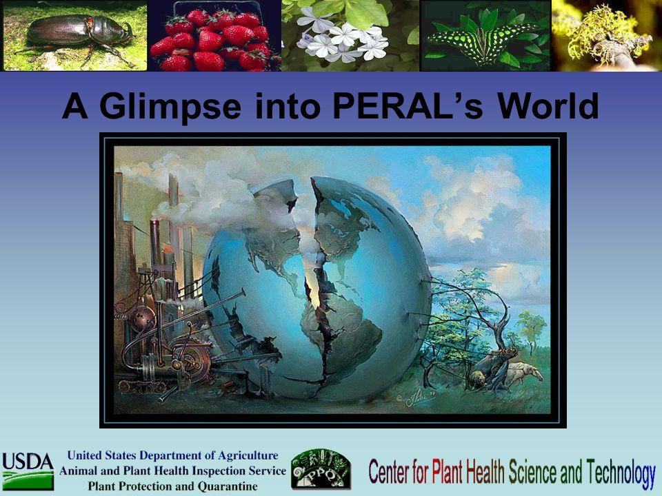 A Glimpse into PERAL's World