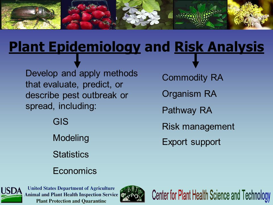 Plant Epidemiology and Risk Analysis