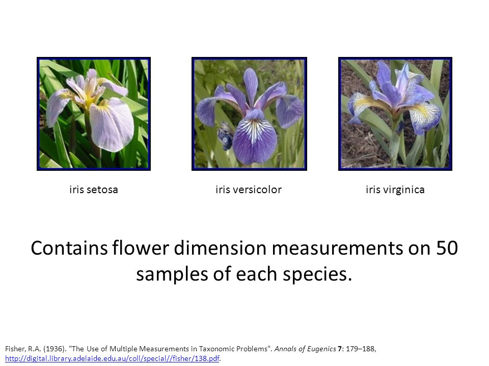 Contains flower dimension measurements on 50 samples of each species.