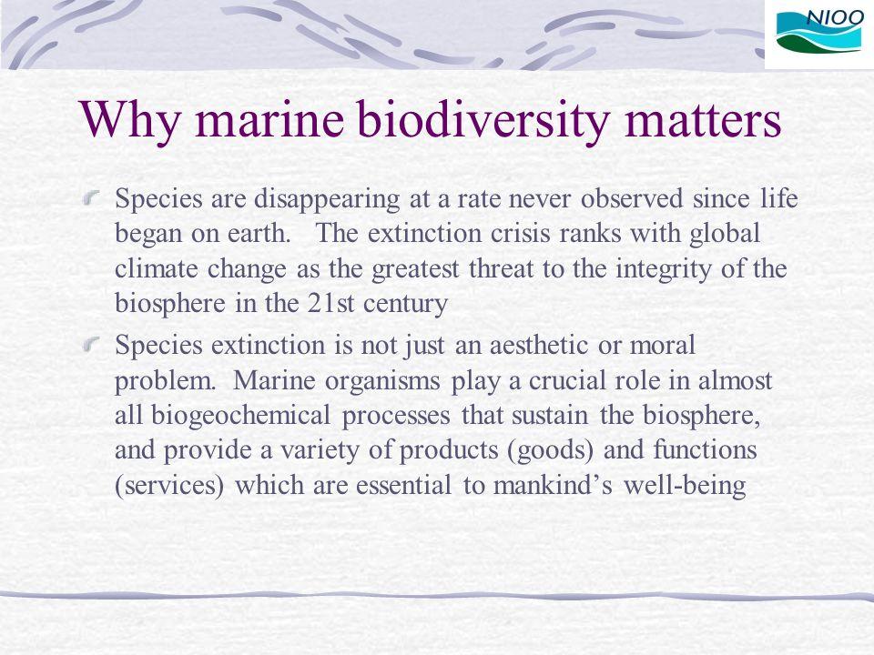Why marine biodiversity matters