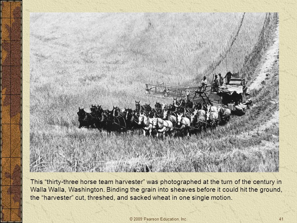 This thirty-three horse team harvester was photographed at the turn of the century in Walla Walla, Washington. Binding the grain into sheaves before it could hit the ground, the harvester cut, threshed, and sacked wheat in one single motion.
