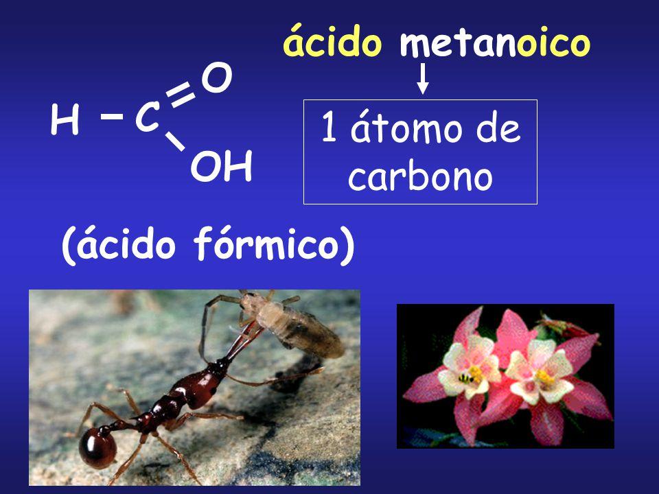 ácido metanoico O H C 1 átomo de carbono OH (ácido fórmico)