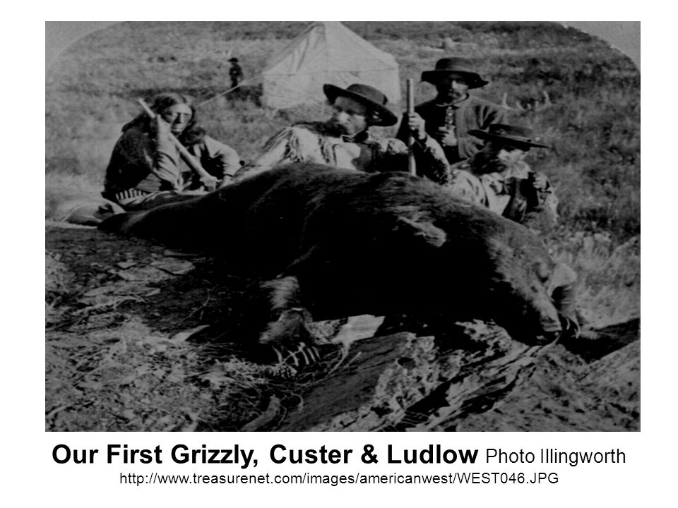 Our First Grizzly, Custer & Ludlow Photo Illingworth http://www