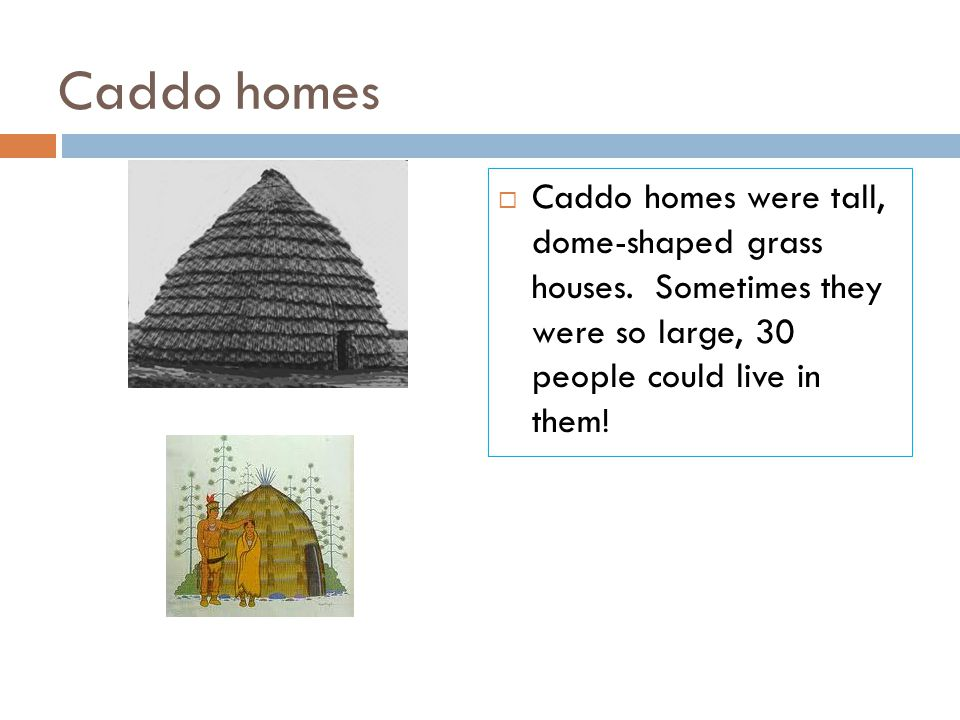 Caddo homes Caddo homes were tall, dome-shaped grass houses.