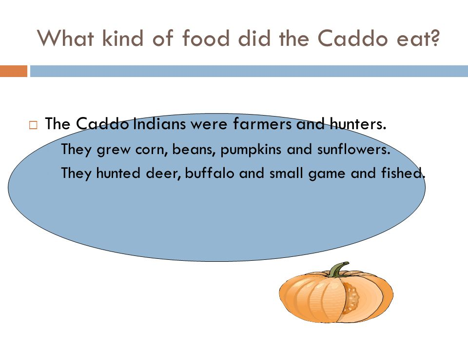 What kind of food did the Caddo eat