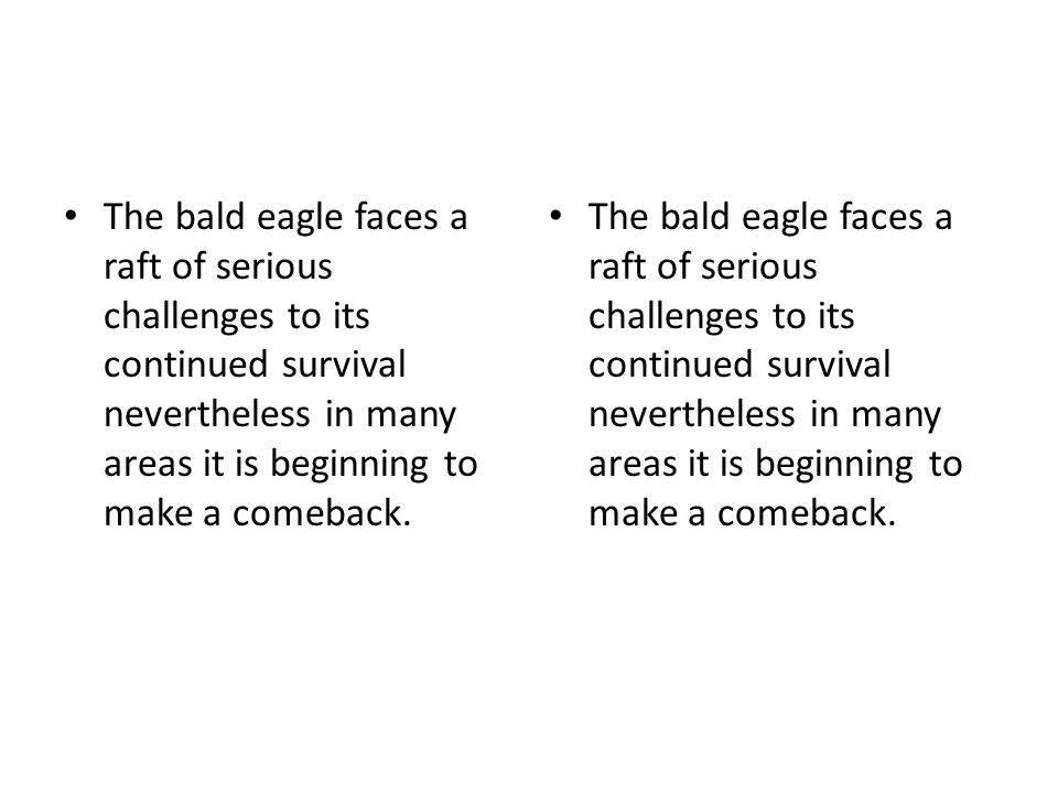 The bald eagle faces a raft of serious challenges to its continued survival nevertheless in many areas it is beginning to make a comeback.